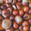 Zwero waste Waschmittel aus Kastanien selber machen